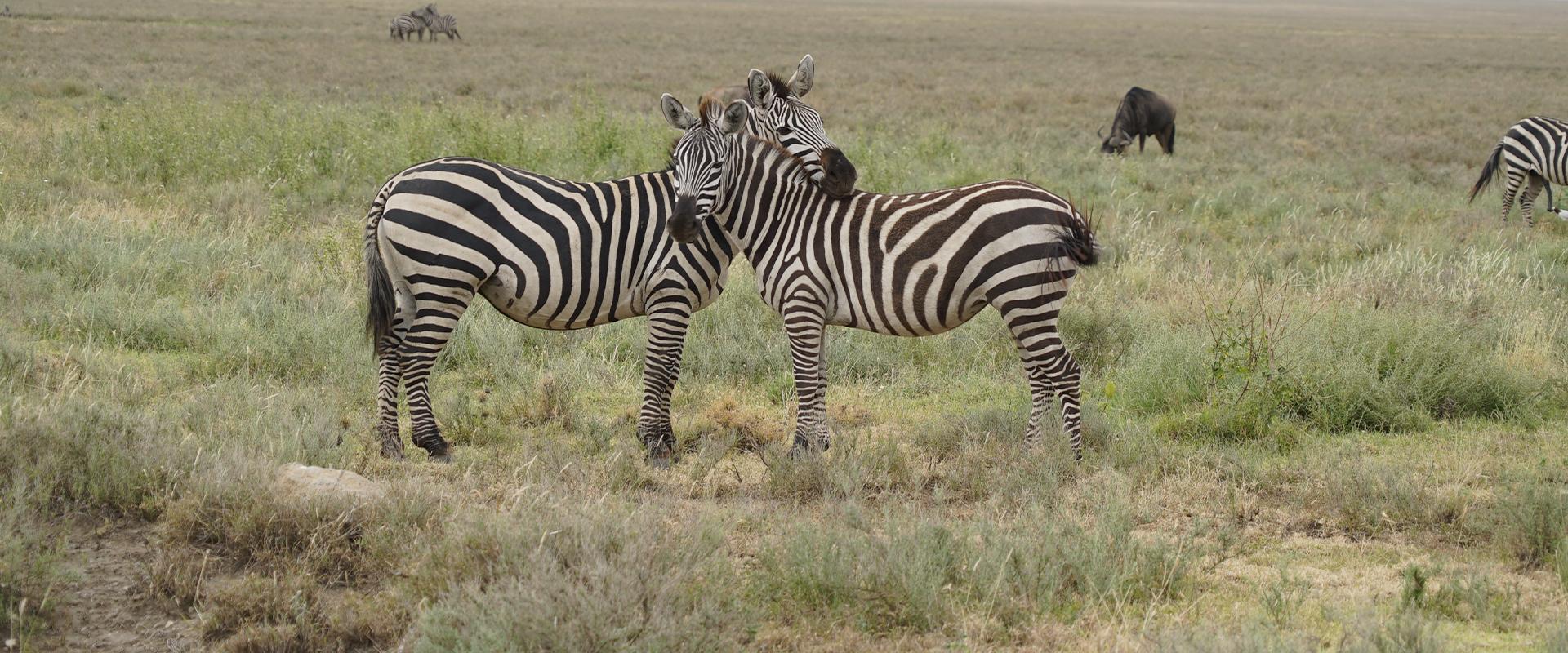 Los 5 mejores Safaris que ver en África