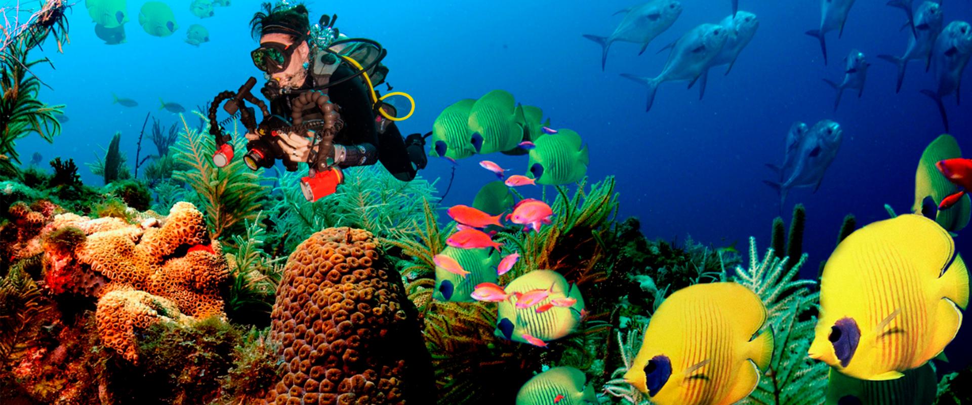 Sri lanka go diving